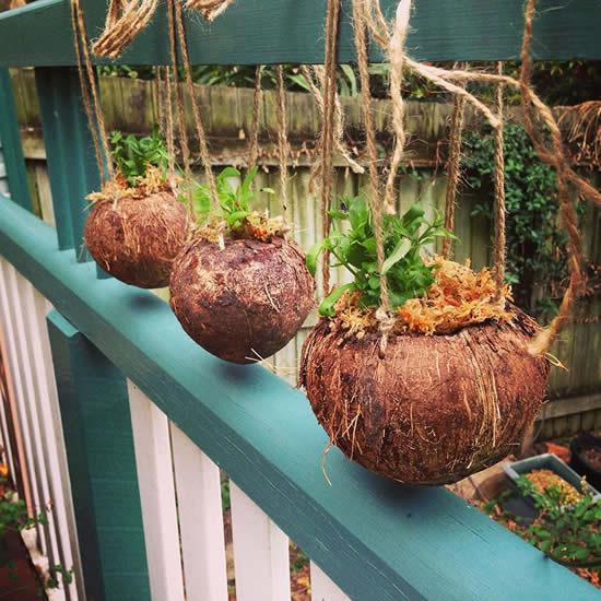 Aprenda como plantar em cocos