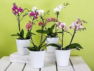 Aprenda a como cultivar orquídea