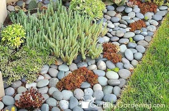 Dicas para jardim com pedras e suculentas
