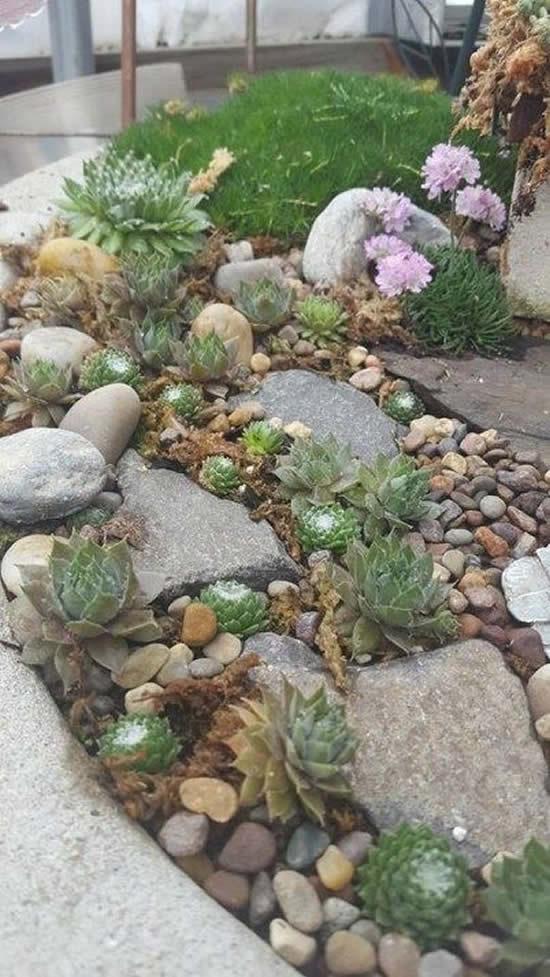 Decore o jardim com pedras e suculentas