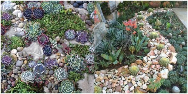Decoração para jardim com pedras e suculentas