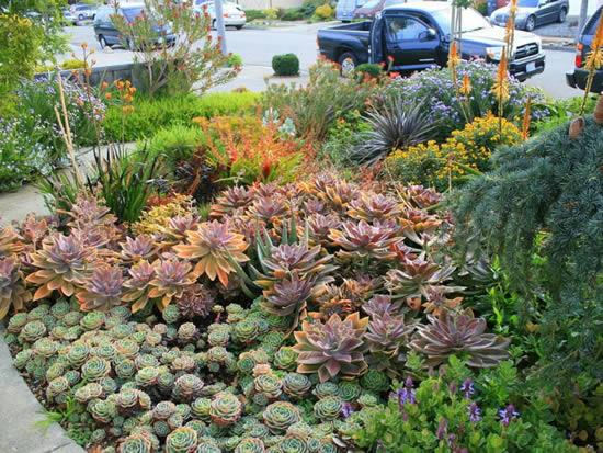 Ideias para fazer jardim de suculentas
