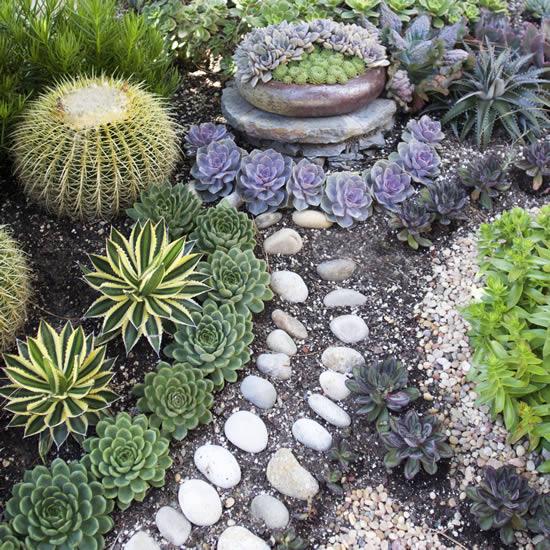 Lindo jardim de suculentas