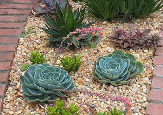 Jardim com suculentas maravilhoso e perfeito