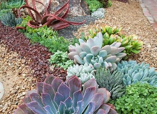Lindo jardim com suculentas