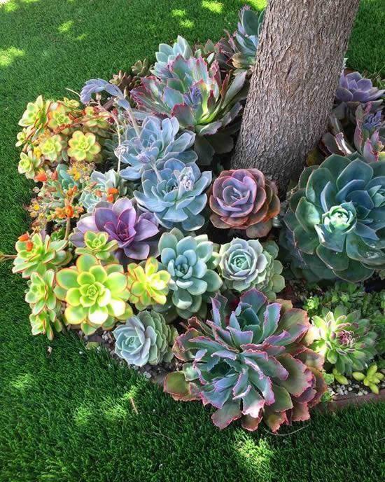 Inspirações para jardim de suculentas
