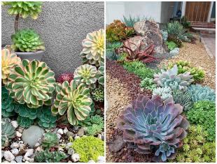 Ideias e inspirações para jardim de suculentas