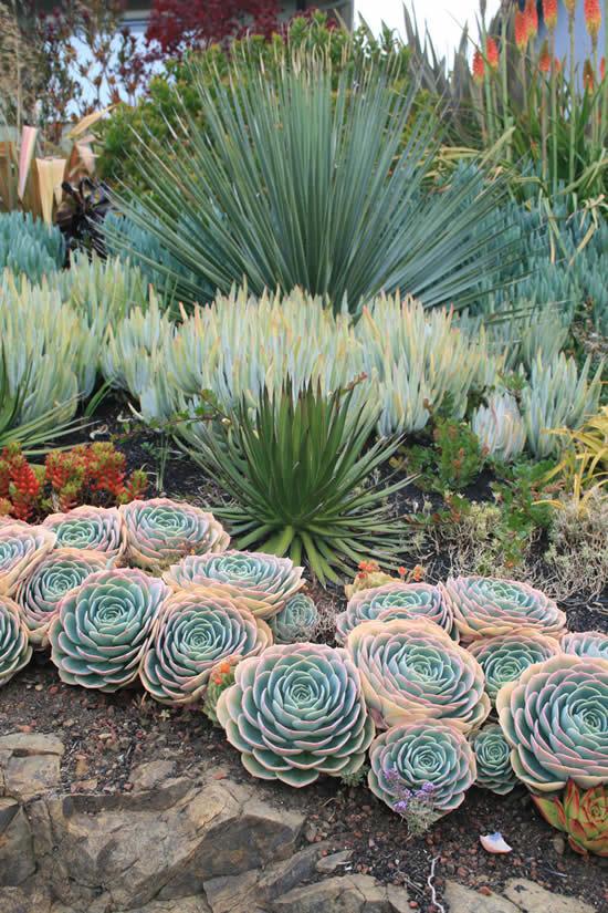 Inspirações para fazer um jardim de suculentas