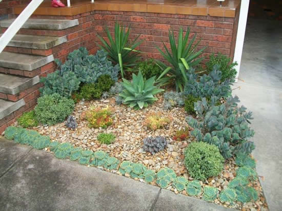 Dicas para fazer um jardim de suculentas