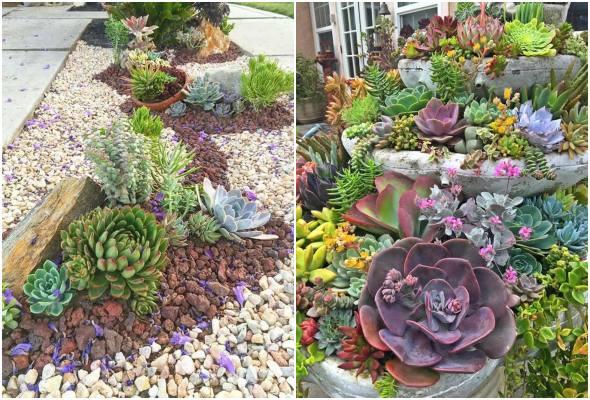 Inspirações de jardins com suculentas