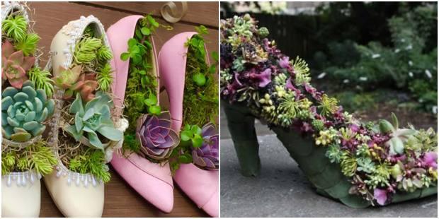 Plante suculentas em sapatos velhos