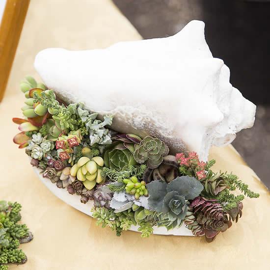 Ideias de suculentas em conchas