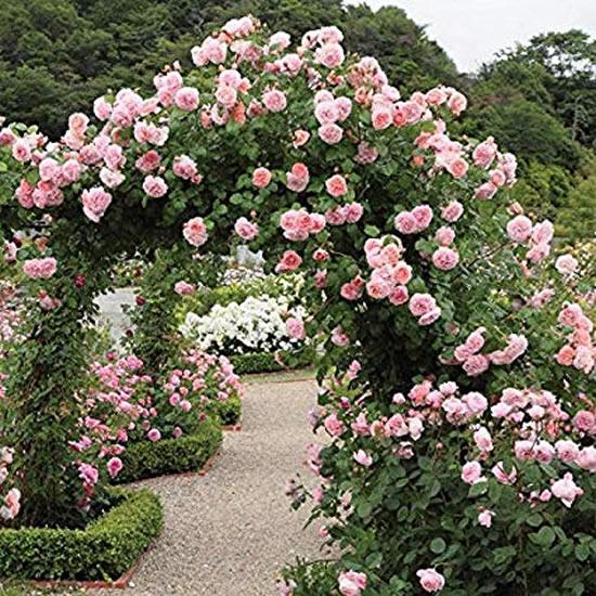 Decoração linda com flores no jardim