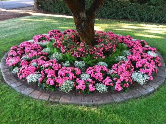 Flores no jardim para enfeitar a casa