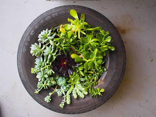 Ideias para plantar suculentas de forma diferente