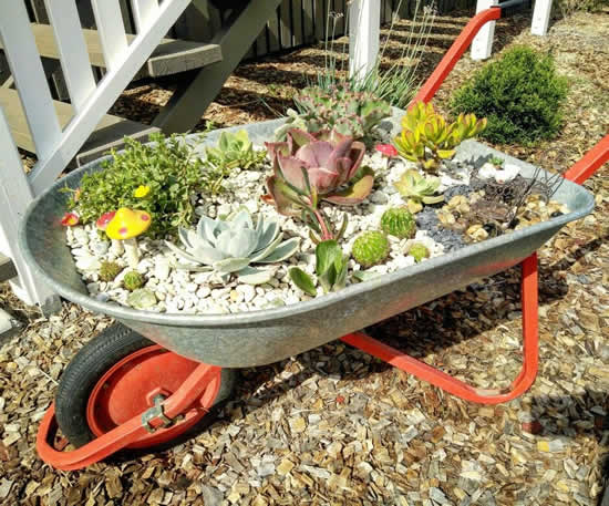 Dicas para plantar suculentas de forma diferente