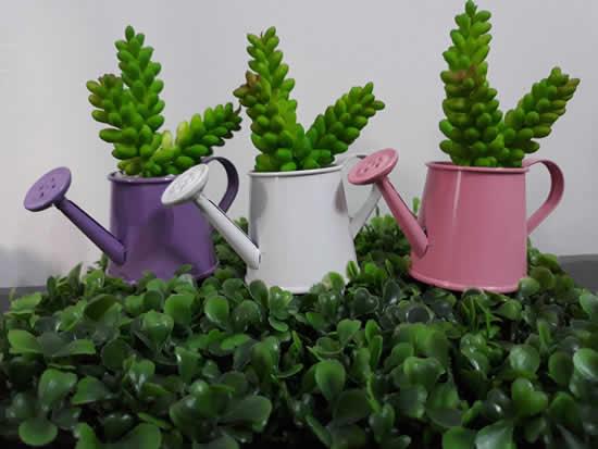 Como plantar suculentas de forma criativa