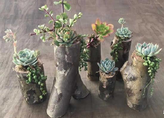 Suculentas plantadas de forma linda
