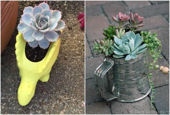 20 formas criativas de plantar suculentas