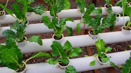 Horta com reciclagem