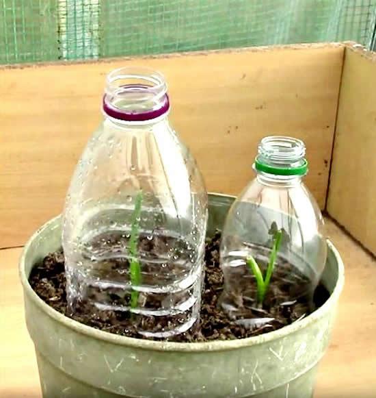 Proteção para horta com garrafa PET