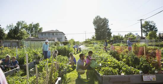 Horta comunitária - Aprenda como fazer