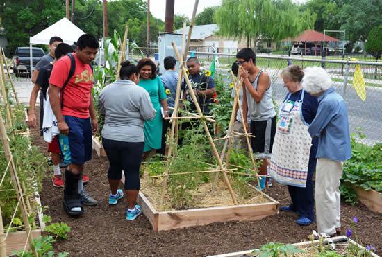Como fazer uma horta comunitária