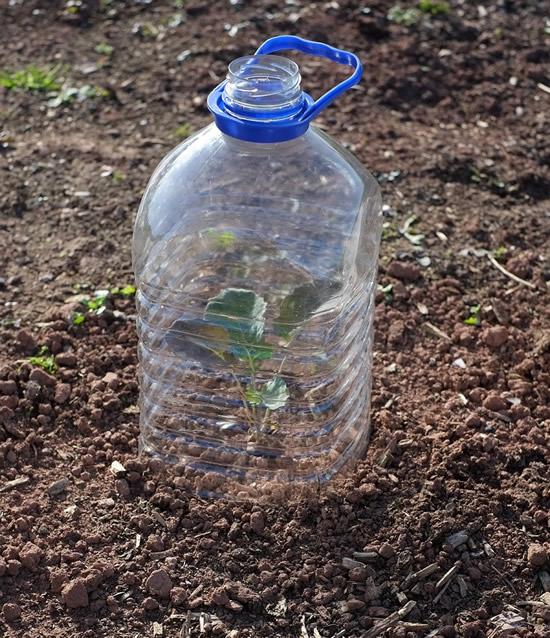 Reaproveitando garrafas PET na jardinagem