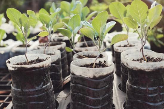 Recicle garrafas PET na jardinagem