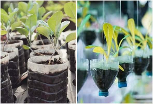Reciclando garrafas PET na jardinagem