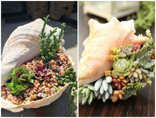 Mini jardim de suculentas com conchas