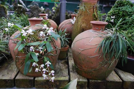 Plante orquídeas em vasos de barro