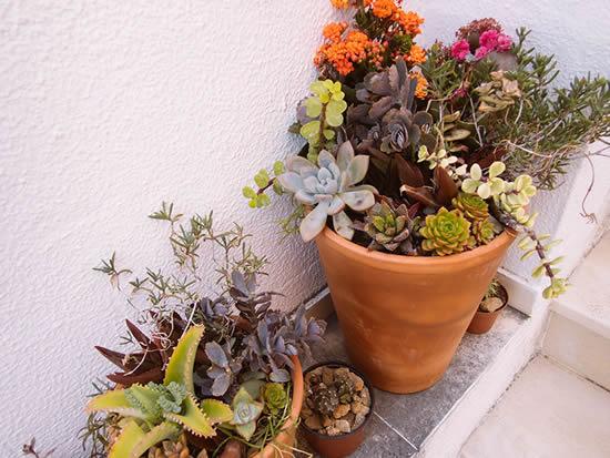 Plante suculentas em vasos de barro