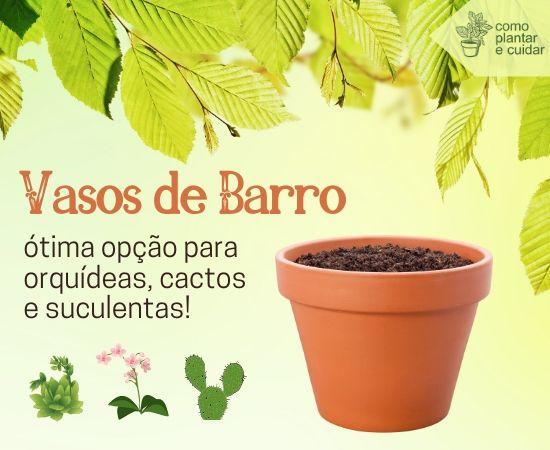 Plante orquídeas e suculentas em vasos de barro