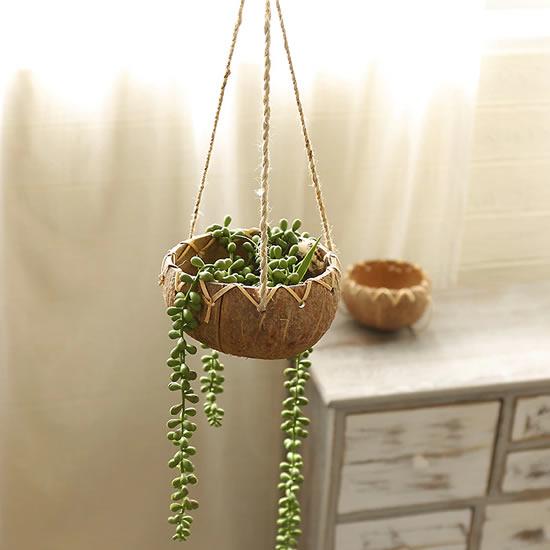 Vasos de coco com plantas