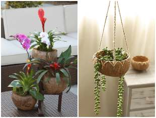 Vasos feitos de cocos: ideias, dicas e inspirações