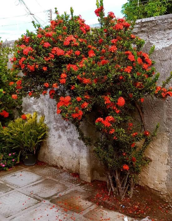 Jardinagem Residencial: dicas, ideias e macetes